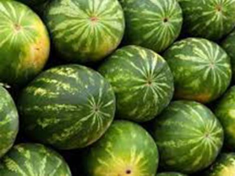 melon 3.png